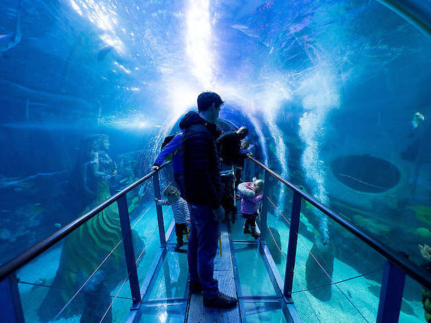 Hang with the fishes at Sea Life Birmingham