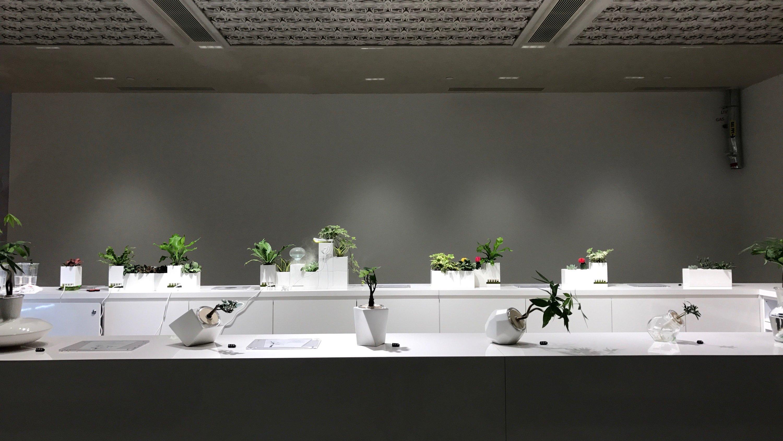 Noah Garden Centre at Downtown Gallery