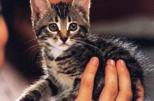 Cat Movies Programme