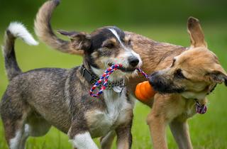 Barcelona invertirà dos milions d'euros en espais per a gossos
