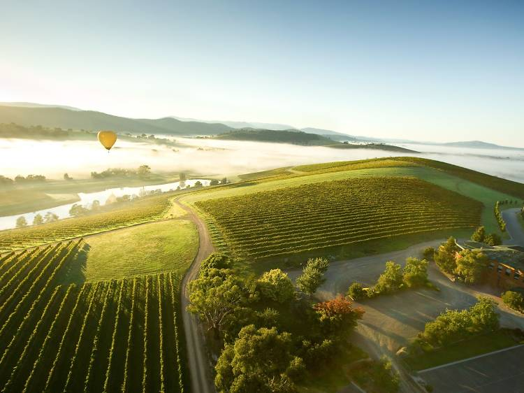 Take a day trip to the Yarra Valley