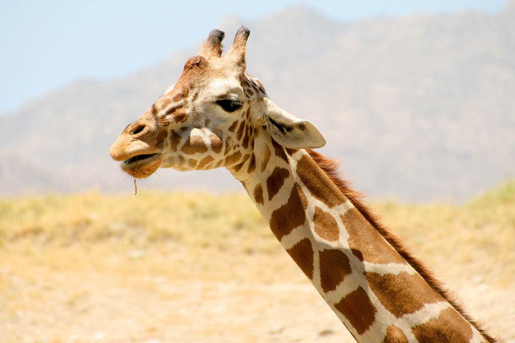 Living Desert Zoo in Palm Desert, CA