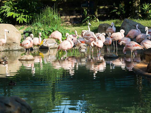 Houston Zoo in Houston