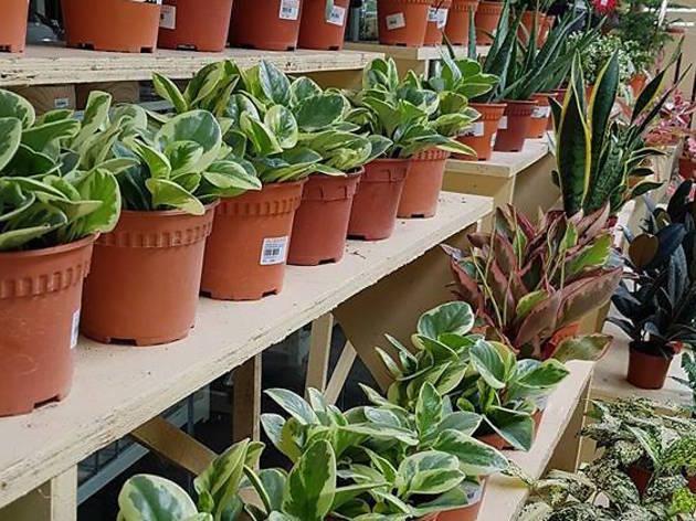 Floristika flowers and plants sale
