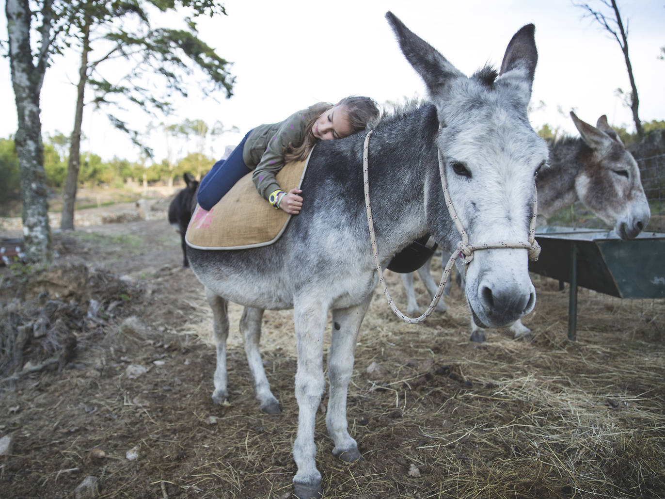 Parques de Sintra: Passeio de Burro