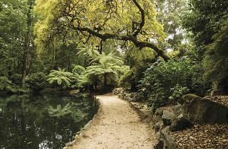 Alfred Nicholas Gardens Yarra Ranges