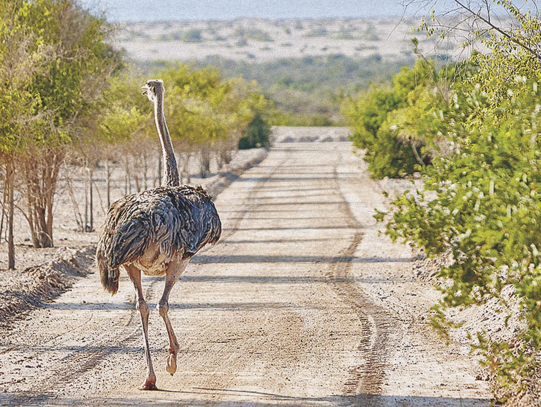 Há um safari incrível na ilha Sir Bani Yas