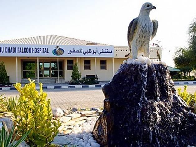 Pode visitar um hospital de falcões