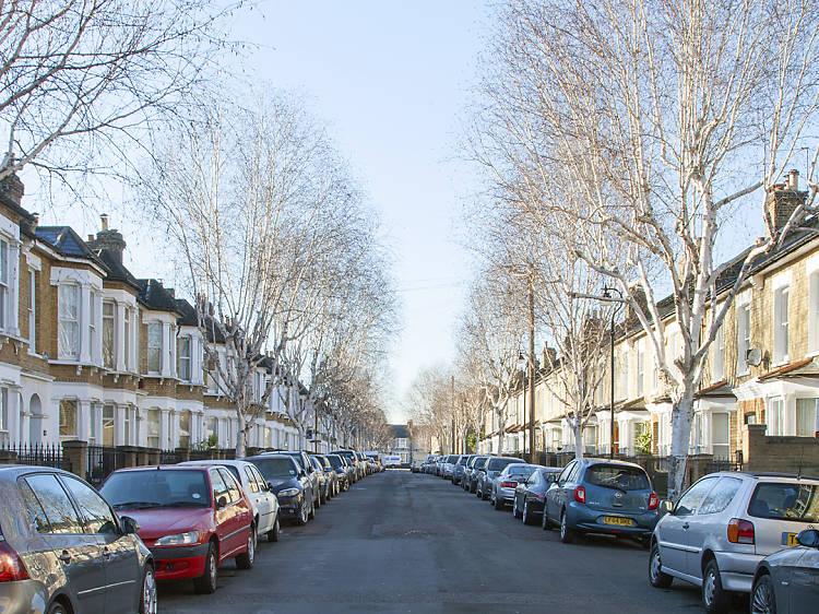 Peckham birches