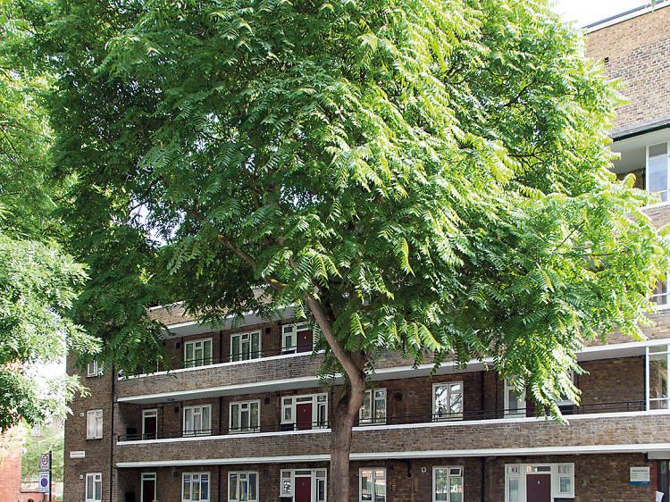 The Bermondsey trees of heaven