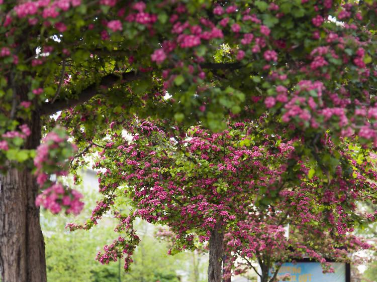 9 of London's best street trees