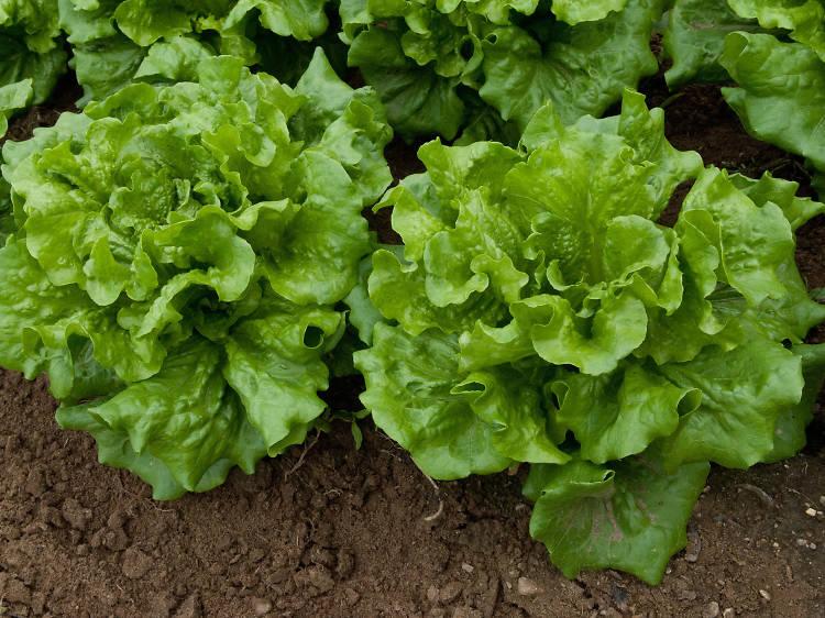 Vegetables: Bilpin Fruit Bowl