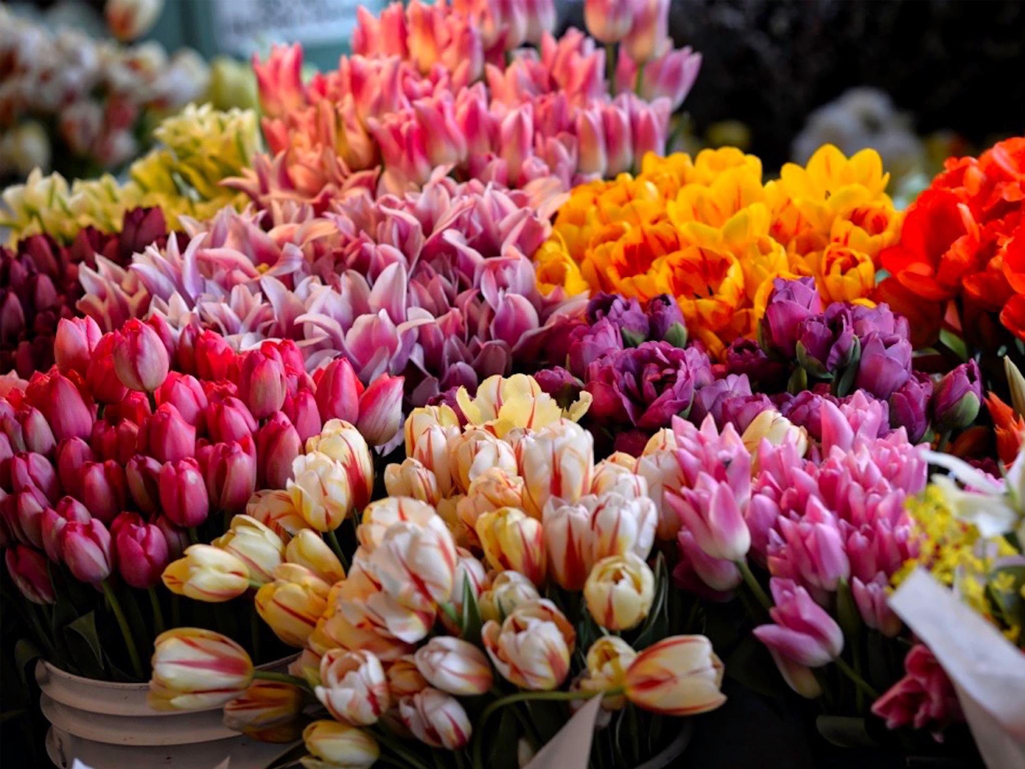 Dónde comprar flores para San Valentín