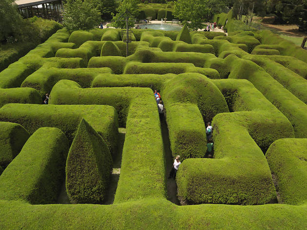 Australia's biggest hedge maze