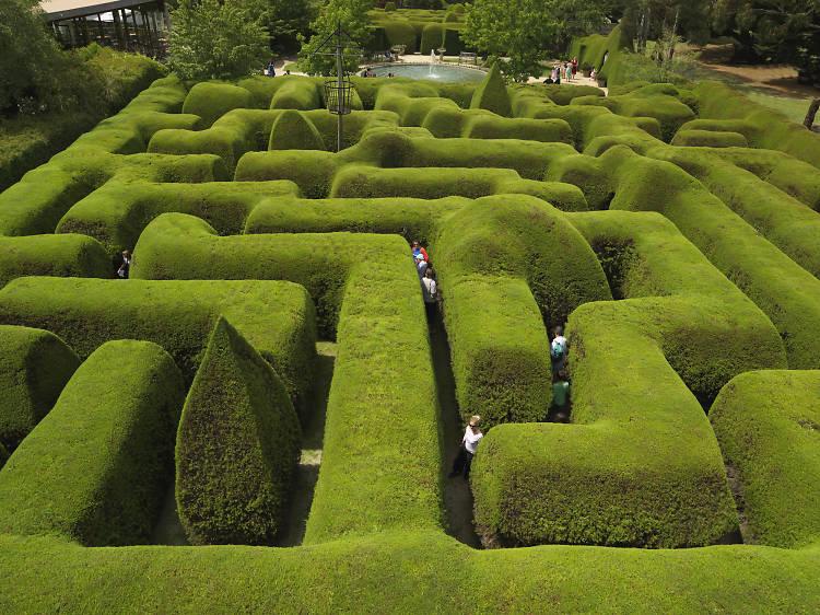 Australia's biggest hedge maze