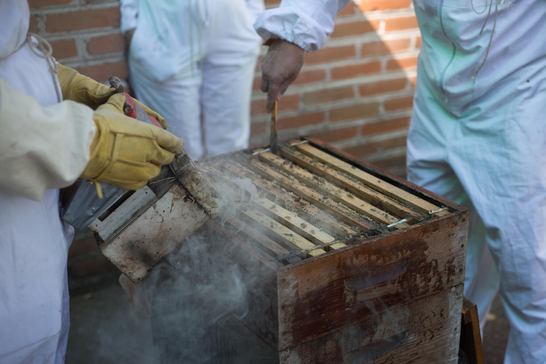 Save the bees, abejas, apicultura, miel, polinización