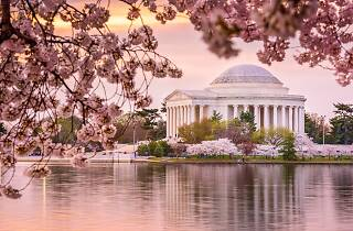 Cherry blossom in Washington, DC