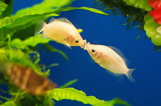 サンシャイン水族館のバレンタイン