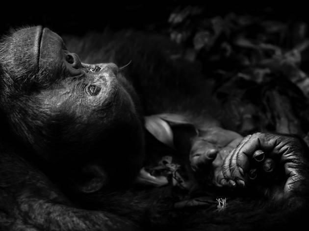(Photograph: Contemplation, Peter Delaney)