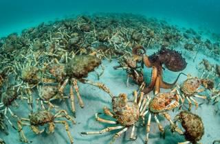 (Photograph: Crab surprise, Justin Gilligan)