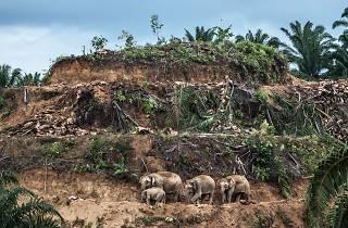 (Photograph: Palm-oil survivors, Aaron Gekoski)