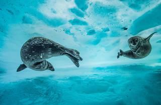 (Photograph: Swim gym, Laurent Ballesta)