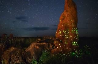 (Photograph: The night raider, Marcio Cabral)