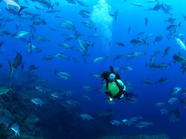 Santa Maria - Nadar com os Peixes