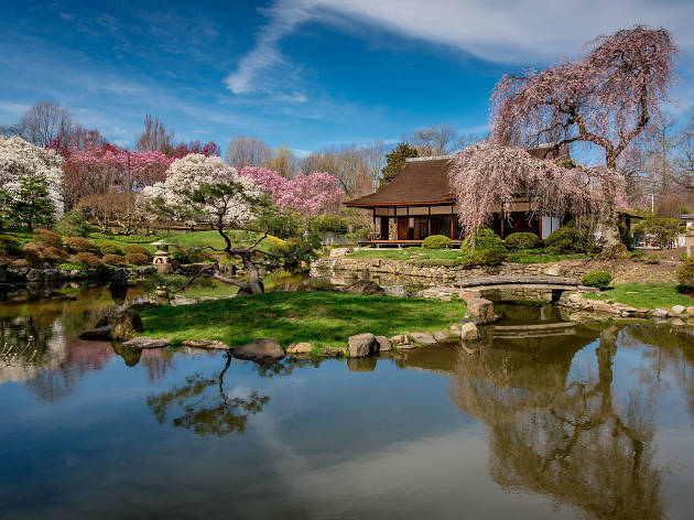 Shofuso Japanese House and Garden hosts the annual Subaru Cherry Blossom Festival each spring.