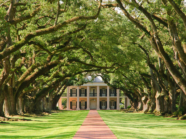 A red path lined with trees leads to a grand plantation house