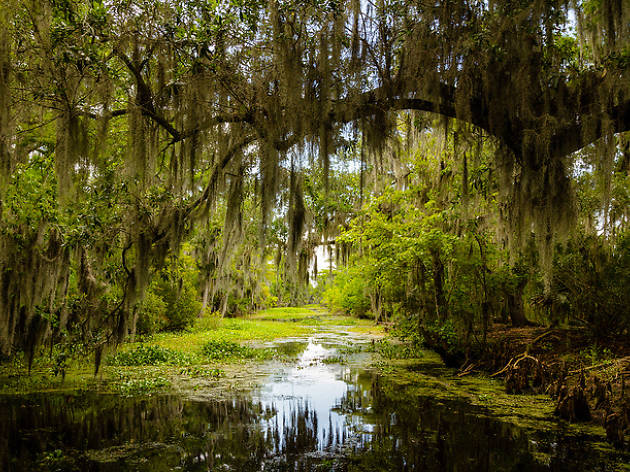 Swamp greenery Louisiana