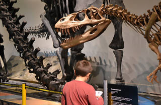 Investiga con tu hijo. Dinosaurios