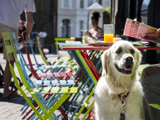 London for dog lovers