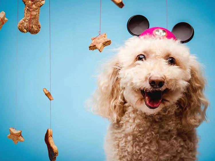 SPCA's Pop-Up: Thursday Yappy Hour & Valentine's Night