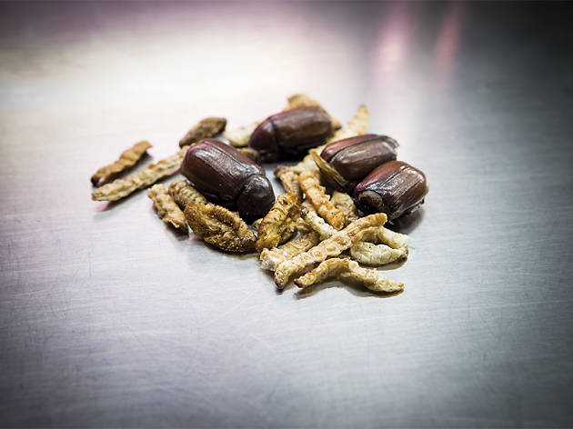Carrefour ya vende insectos cocinados
