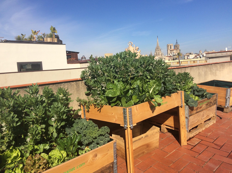 Un hort al teu terrat