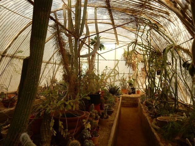 Cactarium at Moorton Botanical Garden Palm Springs
