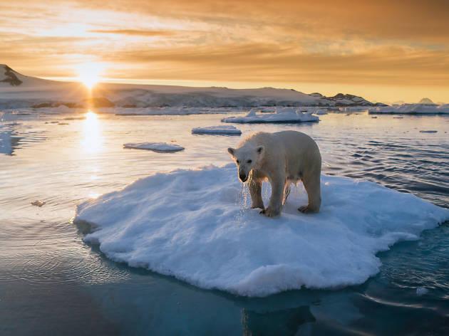 Keith Ladzinski「瀕危的地球」攝影展