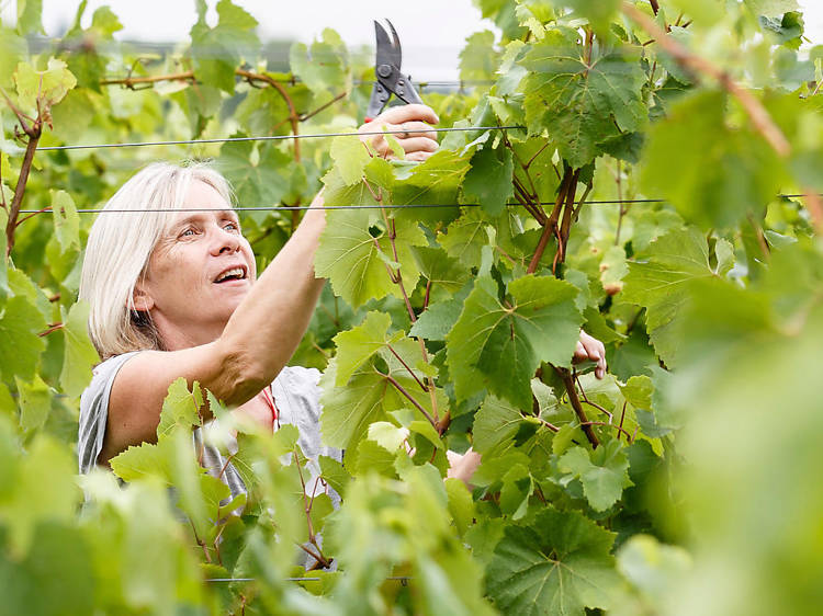 The ecotherapist who founded a vineyard in north London