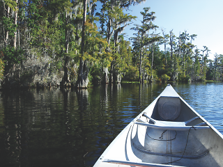 The front of a silver canoe in the swamps of Louisiana