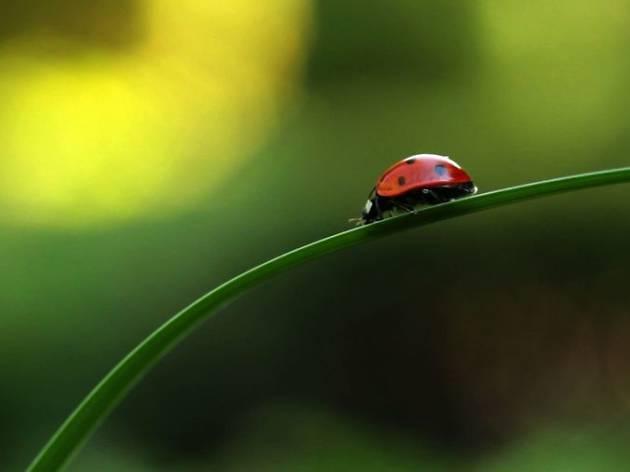 Bugs - Nature's Little Superheroes