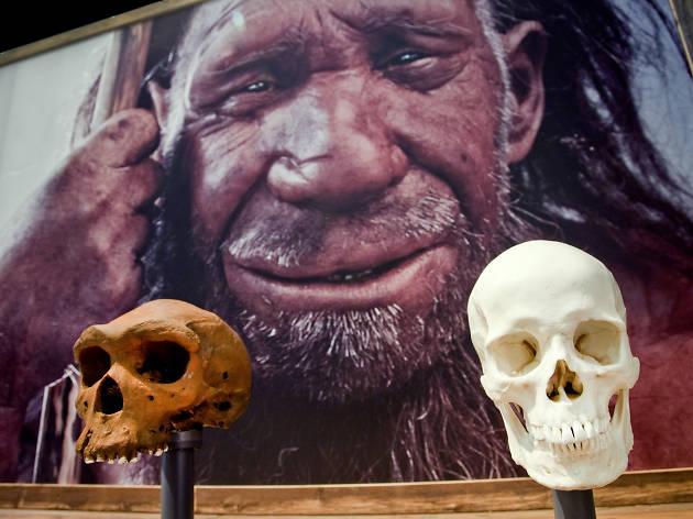 Extinção - O início ou o fim?