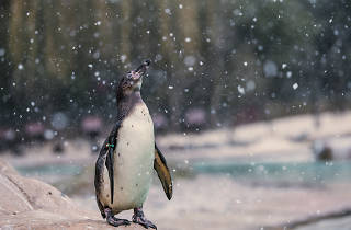 In pictures: London Zoo animals in the snow