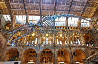 (© Trustees of the NHM)