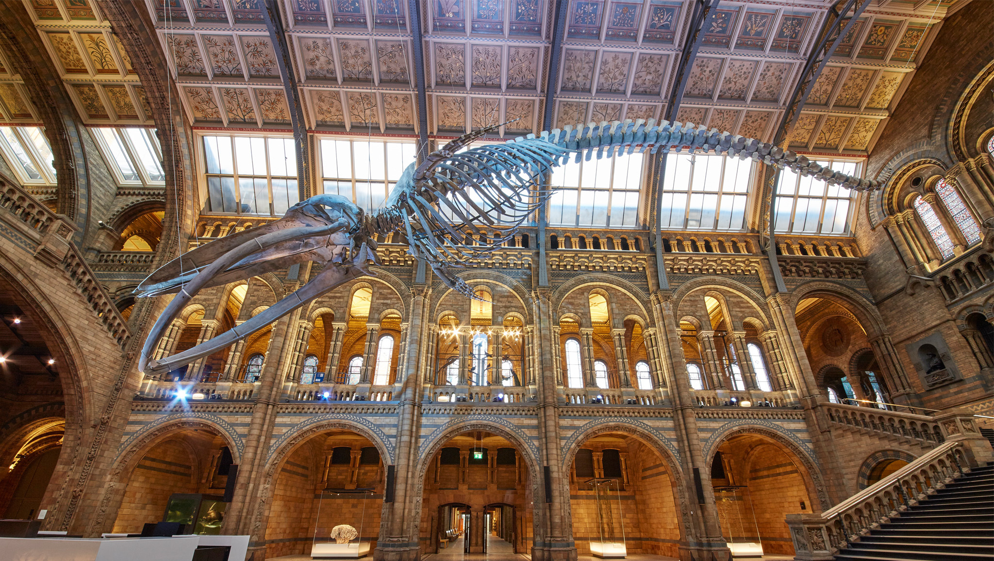 © Trustees of the NHM