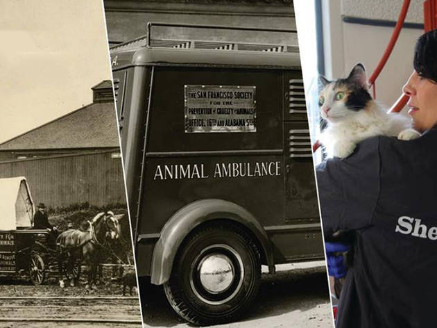 SF SPCA 150th Anniversary Exhibit Opening
