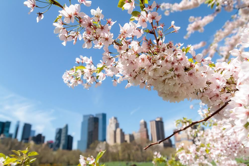 Things to do in spring with kids in NYC