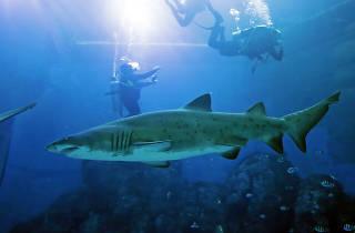 S.E.A. Aquarium Sand Tiger Shark