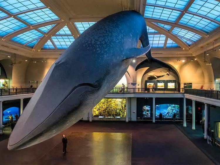 Classic permanent exhibits for kids