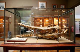 Visita Comentada ao Museu Geológico e Mineiro